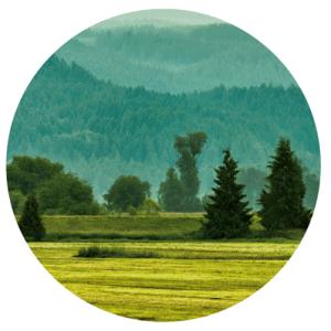 cirkel-hout